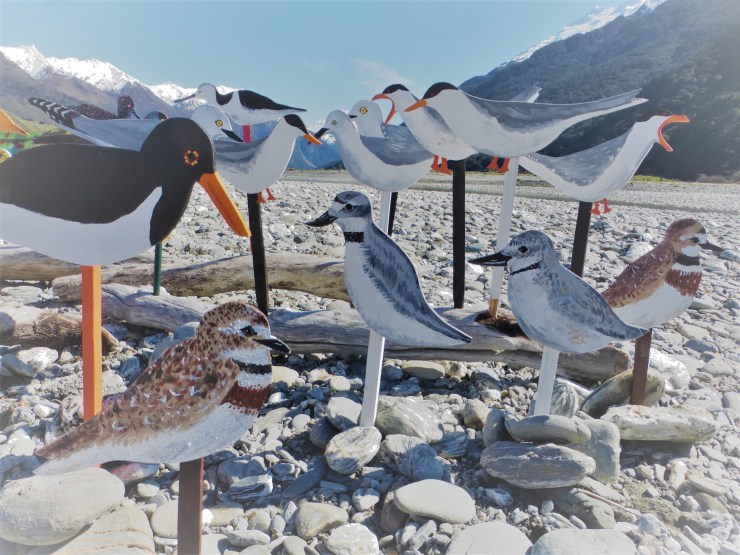 braided river birds