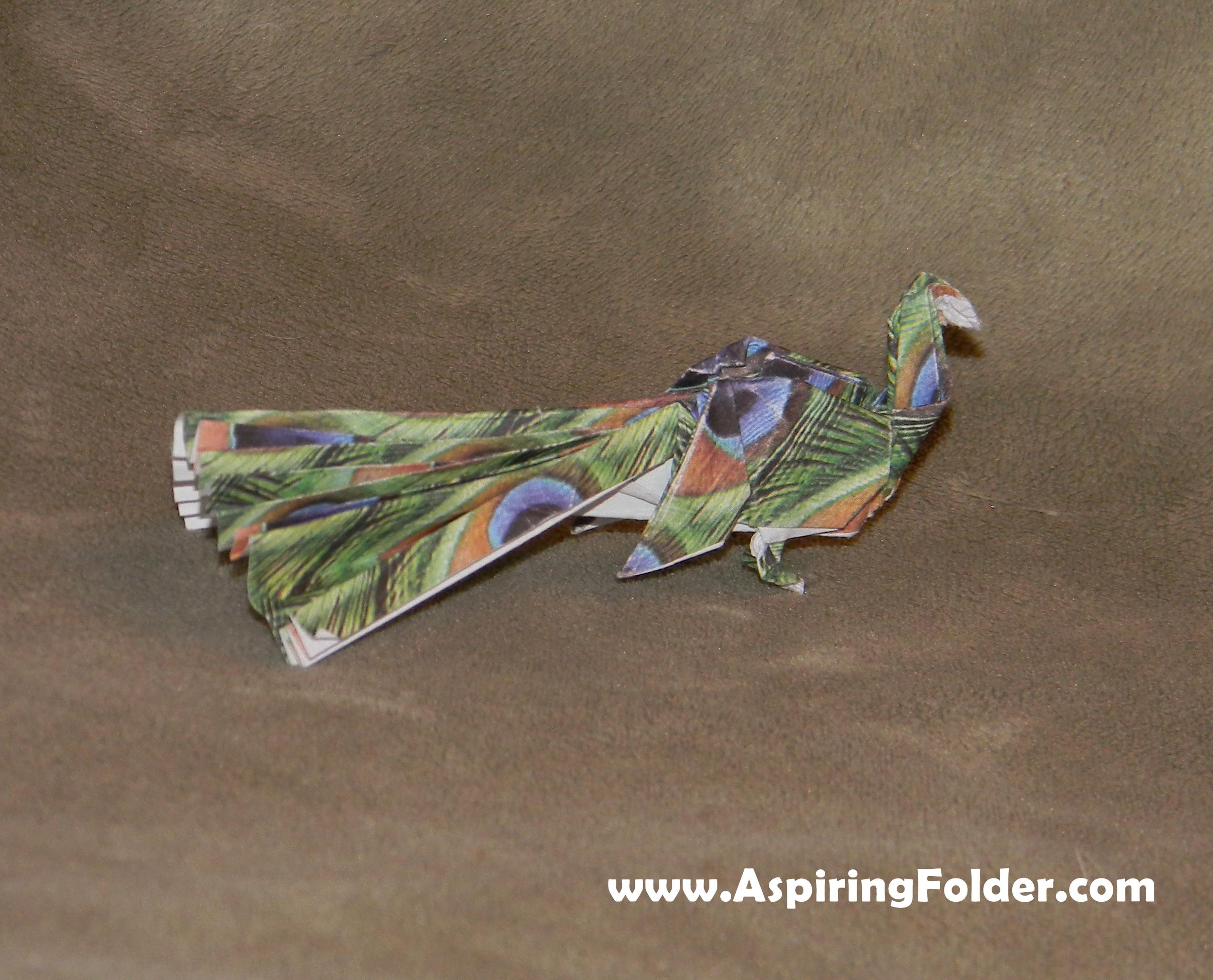 peacock bird diagram epiphone les paul coil tap wiring aspiring folder an origami blog page 3