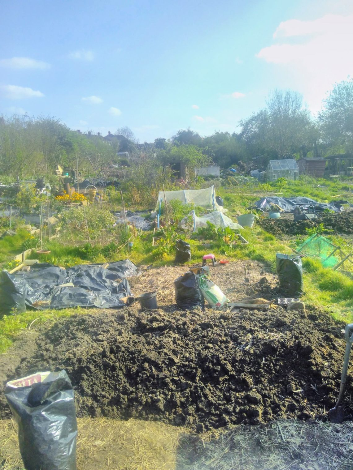 View of the allotment