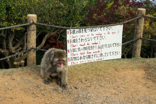 Warning sign and monkey at Iwatayama Monkey Park.