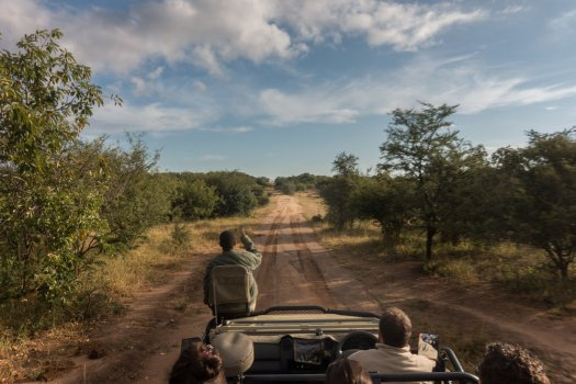 Out on a game drive.