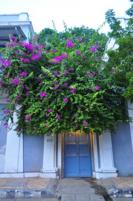 "The streets around the French quarters are filled with such pretty "" SO French' sights. This little door with thr Bougainvillia headdress is a celebrated image across the Globe"
