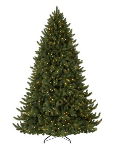Vermont White Spruce from Balsam Hill
