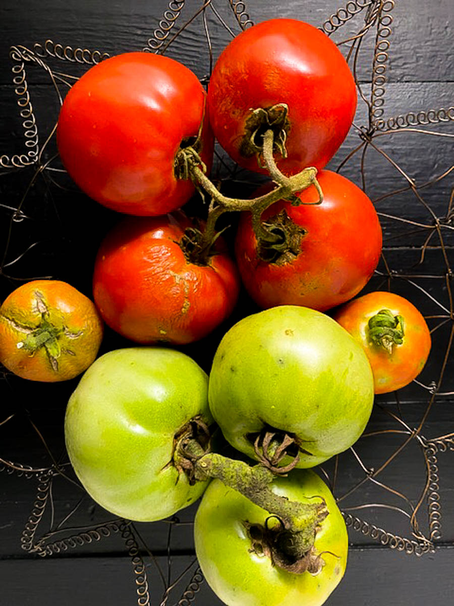 Garden tomatoes in a wire bowl.