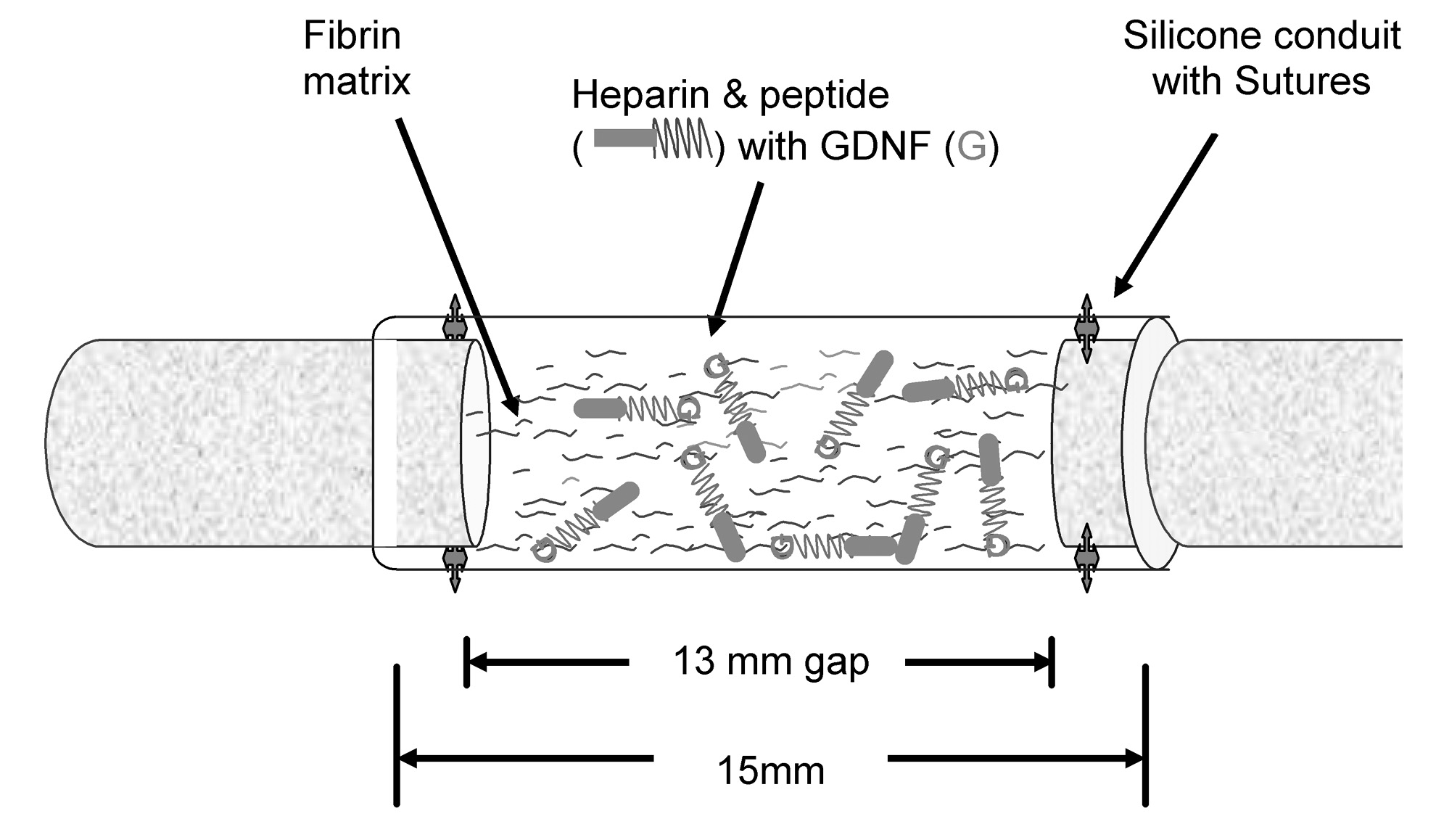 Controlled Neurotrophic Factor Delivery To Promote