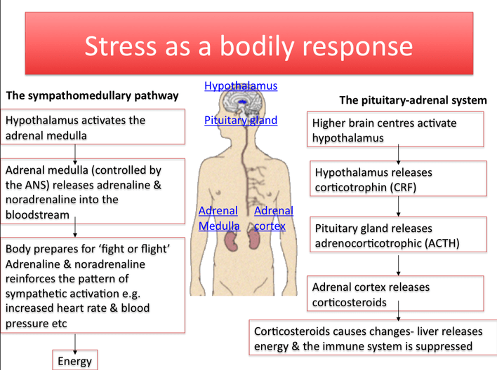Acute and Chronic Stress Responses