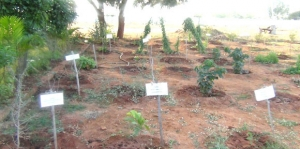</p> <p> </p> <h3><strong>Garden with Medicinal Plants</strong></h3> <p> </p> <p>
