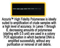 Accuris Taq Polymerase