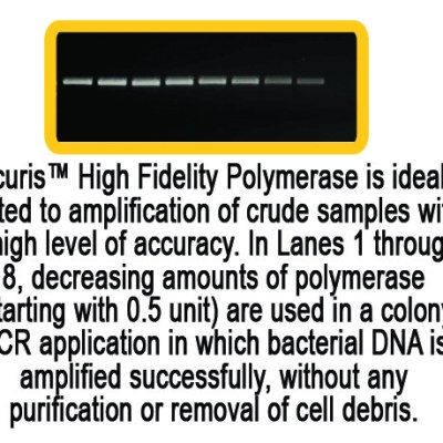 Accuris Taq Polymerase