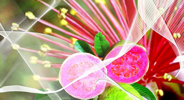 frutas liquidas