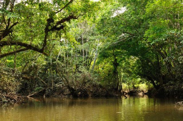 Hutan tropis di hutan Kalimantan.