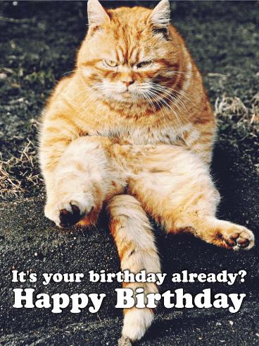 Happy Birthday Cat Images Funny : happy, birthday, images, funny, Grumpy, Kitty, Funny, Birthday, Greeting, Cards, Davia