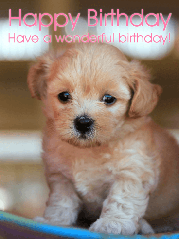 Cute Puppy Birthday Card Birthday & Greeting Cards By Davia