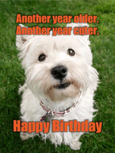 Animal Happy Birthday Cards Birthday & Greeting Cards By