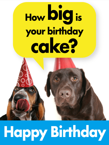 Happy Birthday Dog Lover : happy, birthday, lover, Birthday, Funny, Greeting, Cards, Davia