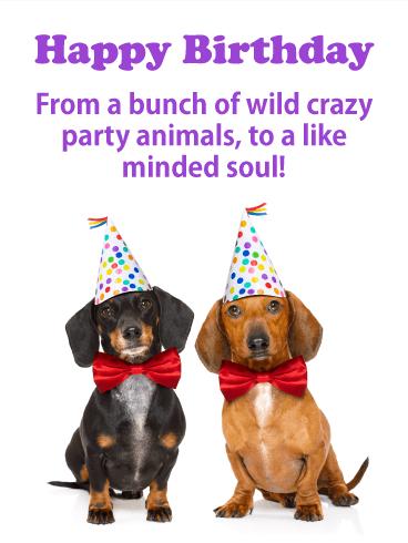 animal happy birthday cards