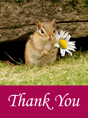 1,000+ Cute Animal Thank You Cards | Zazzle