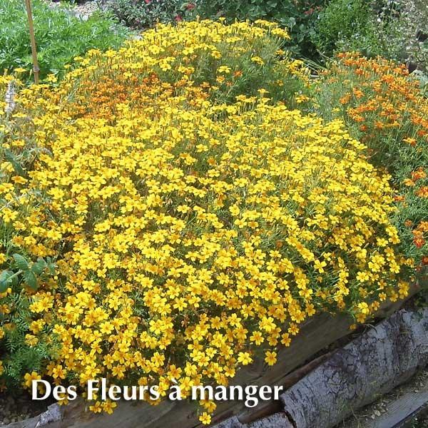 https://i0.wp.com/asset.keldelice.com/attachments/photos/623664/large/fleurs-a-manger.jpg