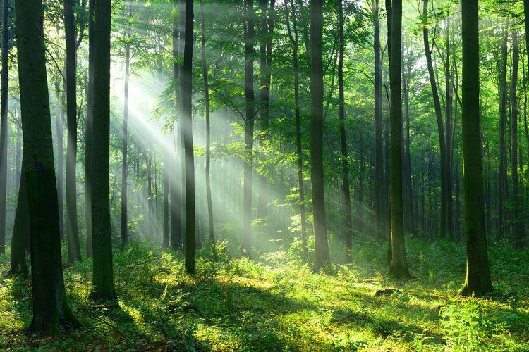 12000 Hektar Lahan di Jabar Bakal Jadi Hutan Negara