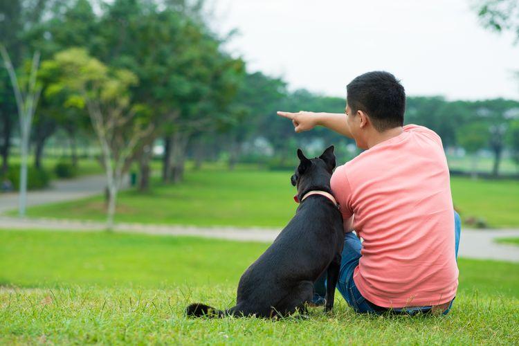 Illustration of a pet dog