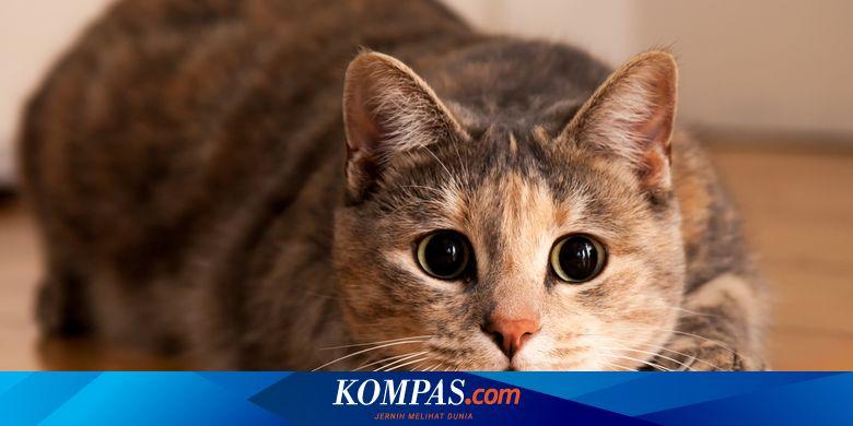Terinfeksi Virus Distemper, 27 Kucing di Karanganyar Mati Mendadak ...
