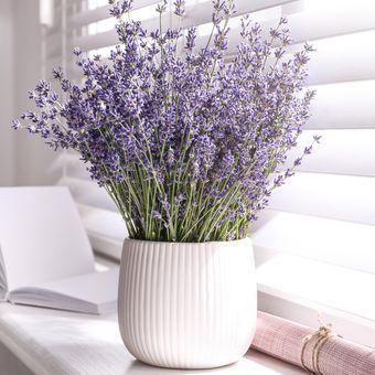 Ilustrasi tanaman lavender di pot.