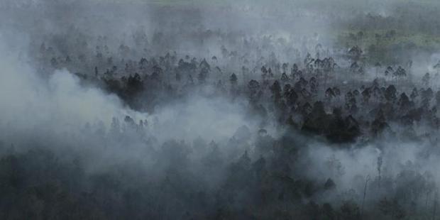 Kebakaran Hutan Meluas, Riau Diselimuti Kabut Asap
