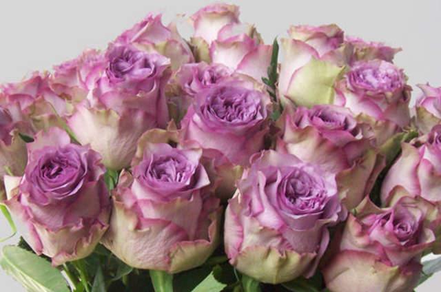 Blumenoase  Bewertungen Fotos und Telefonnummer