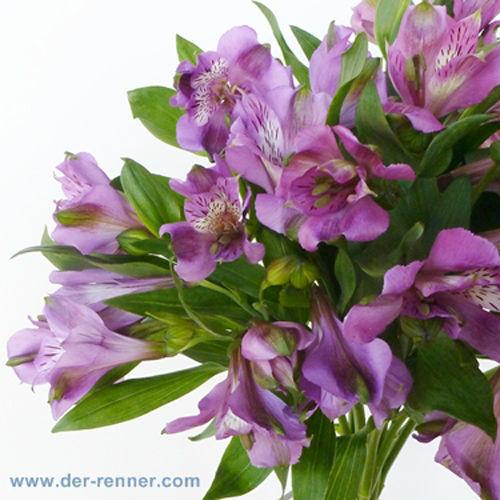 Der Renner  Blumenversand und Service  Hochzeit