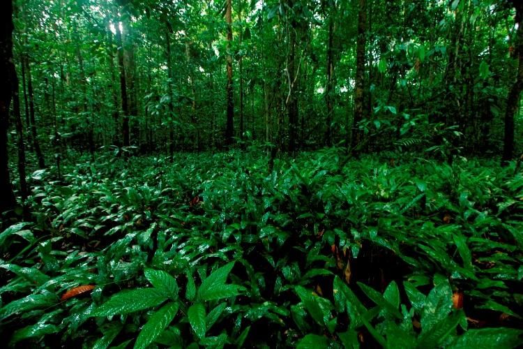 Ini Tipe Vegetasi Hutan Tumbuhan dan Satwa Endemik yang