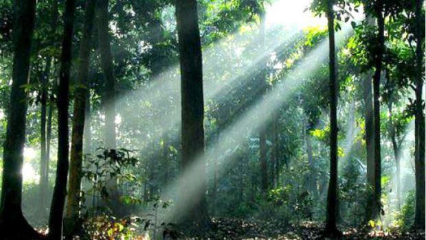 Kerusakan Hutan Tropis Indonesia dan Belajar dari Kearifan