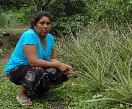Elda Chiqueno squats next to the bromeliad (dajudie) plant. Photo credit: Ines Hinojosa.