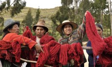 A red cochineal dye day in the village of Acopia, Peru.