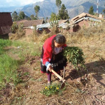 A young girl works her family's land in Patabamba.