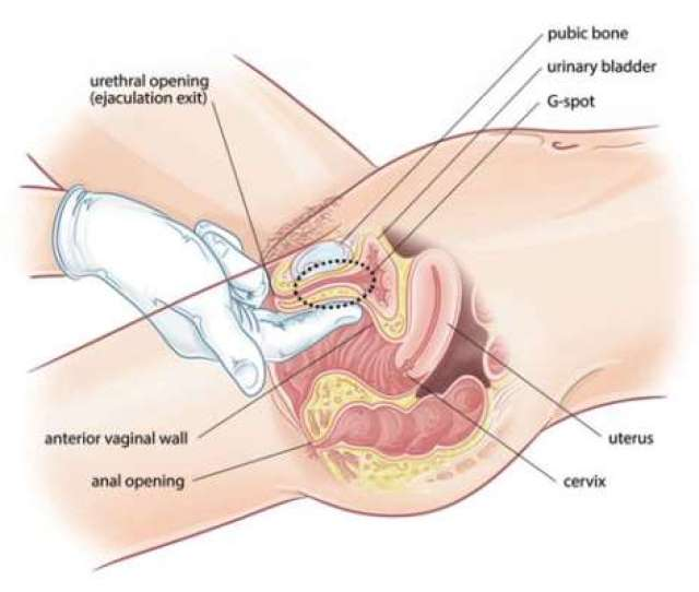 Hymen Is A Thin Membrane That Covers The Vaginal Opening From Inside It May Vary In Shapes With Most Common Being A Half Moon Shape That Allows Menstrual