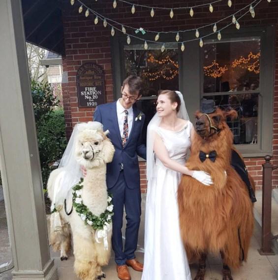 Hochzeit mit Lamas  RTL II News