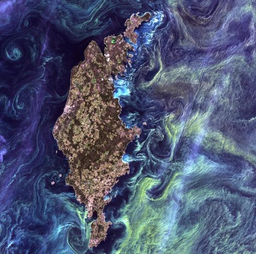 """Titled, """"Van Gogh from Space"""" - This image represents the famous painting, Starry Night, due to, """"greenish phytoplankton"""" which, """"swirl in the dark water around Gotland, a Swedish island in the Baltic Sea."""" Image Credit: NASA"""