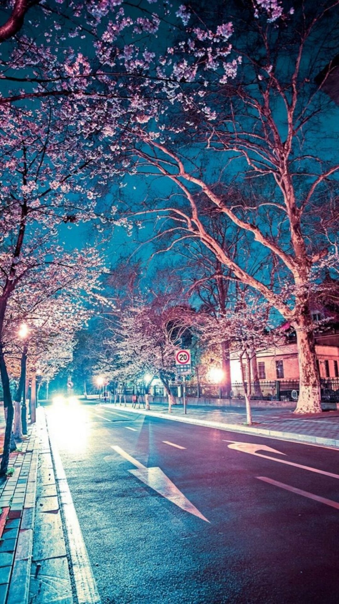 65 Japanese Street Cherry Blossom Night Scenery Iphone 6 Wallpaper Android Iphone Hd Wallpaper Background Download Png Jpg 2021