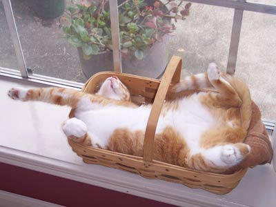 Image result for cat in a basket
