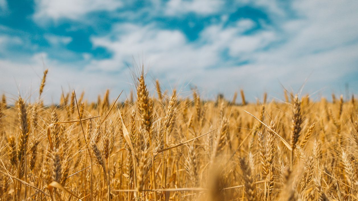 Quarantaine : et le monde agricole ? TOUTFILM