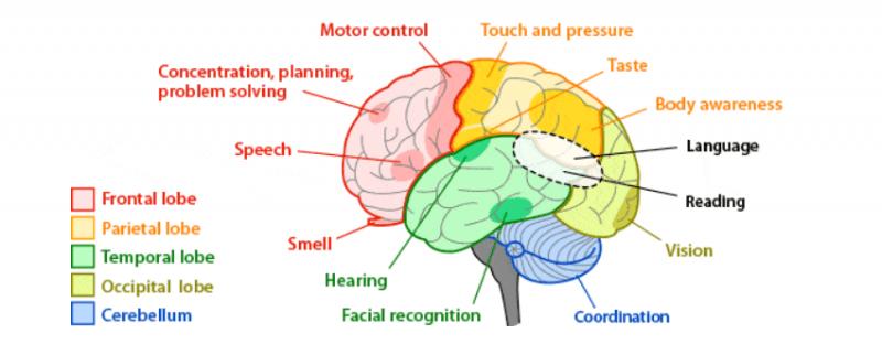 7 عادات خطيرة تدمر الدماغعادات خطيرة تدمر الدماغ (2)
