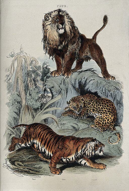 An illustration for the story A Fable by the author Mark Twain