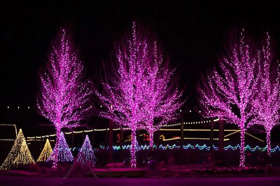 Northern Lights Christmas Trees
