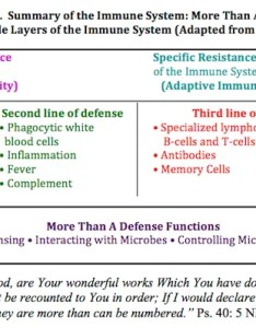 Summary and conclusions the immune system also our impressive more than  defense answers in genesis rh answersingenesis