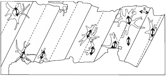 Fossil Grove and other Paleozoic Forests as Allochthonous