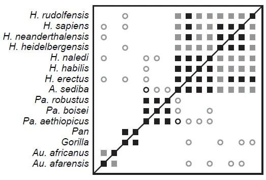 Taxon Sample Size in Hominin Baraminology: A Response to O