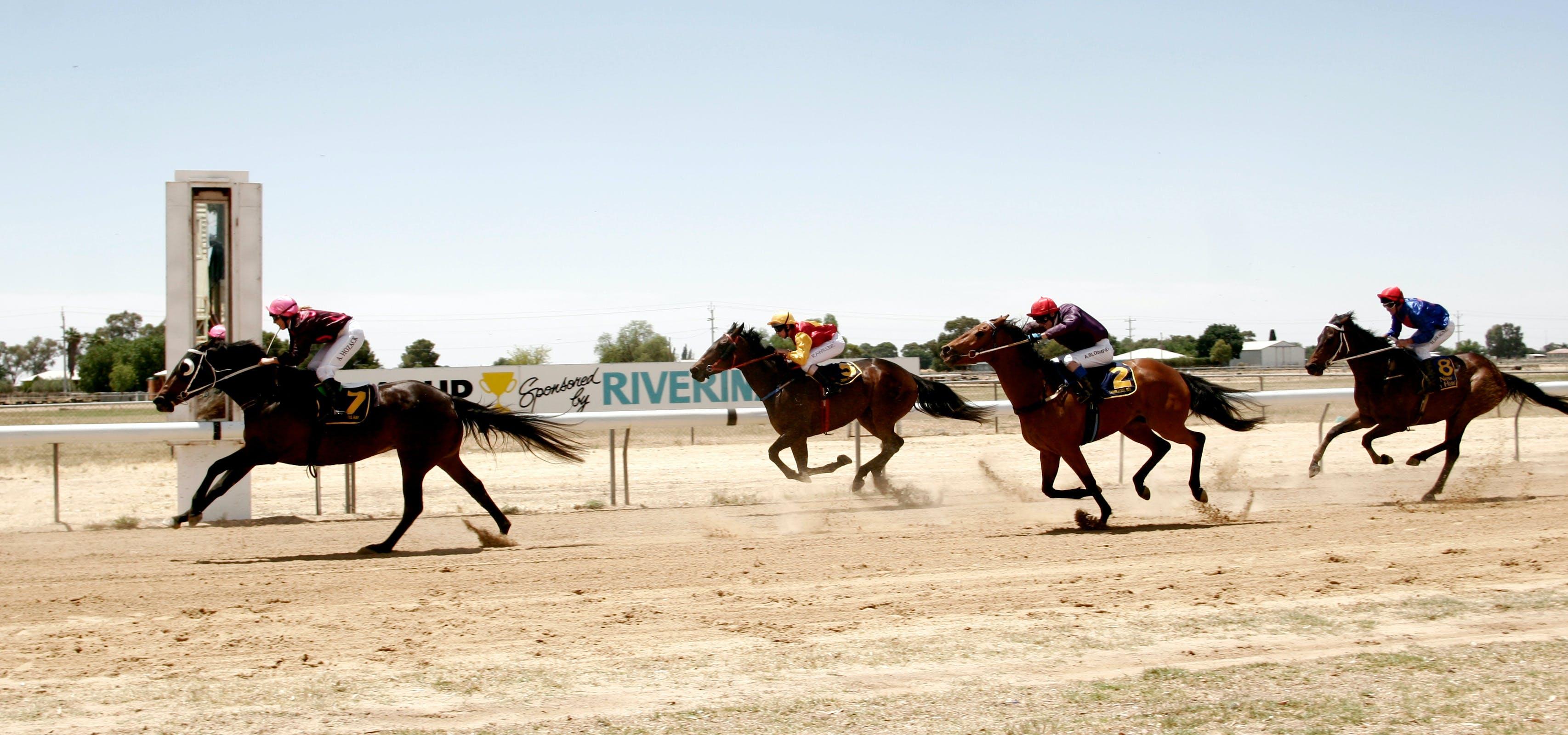 sofala show horse program average weight of sofa set nsw festivals and celebrations holidays accommodation carrathool races
