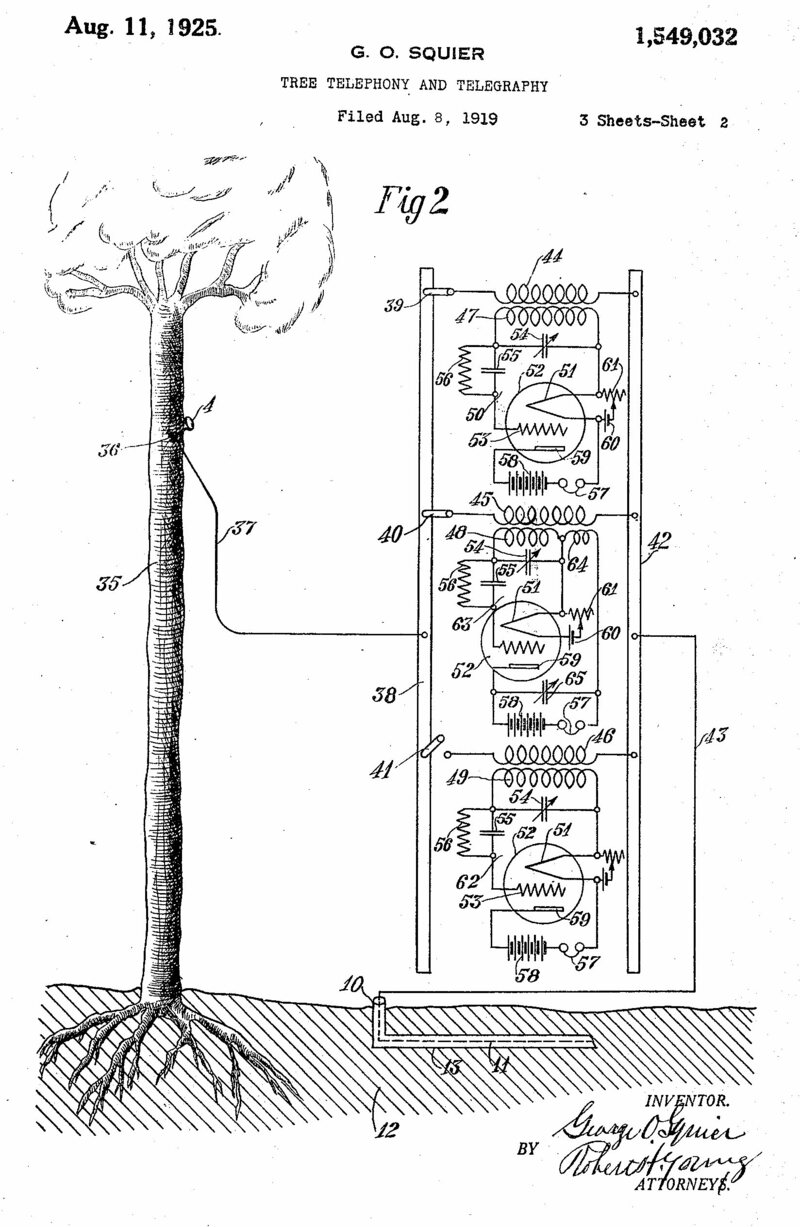 The WWI Plan To Turn America's Trees Into Telephones