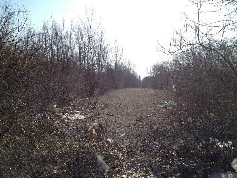 Identifying Trees Missouri