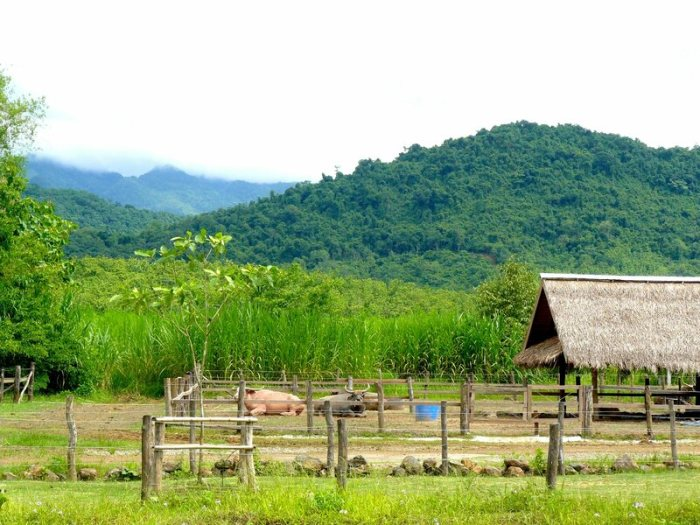 The farm is nestled at the foothills of the Laos mountain range.